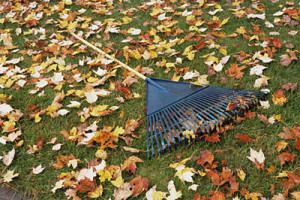 вывоз листвы и веток